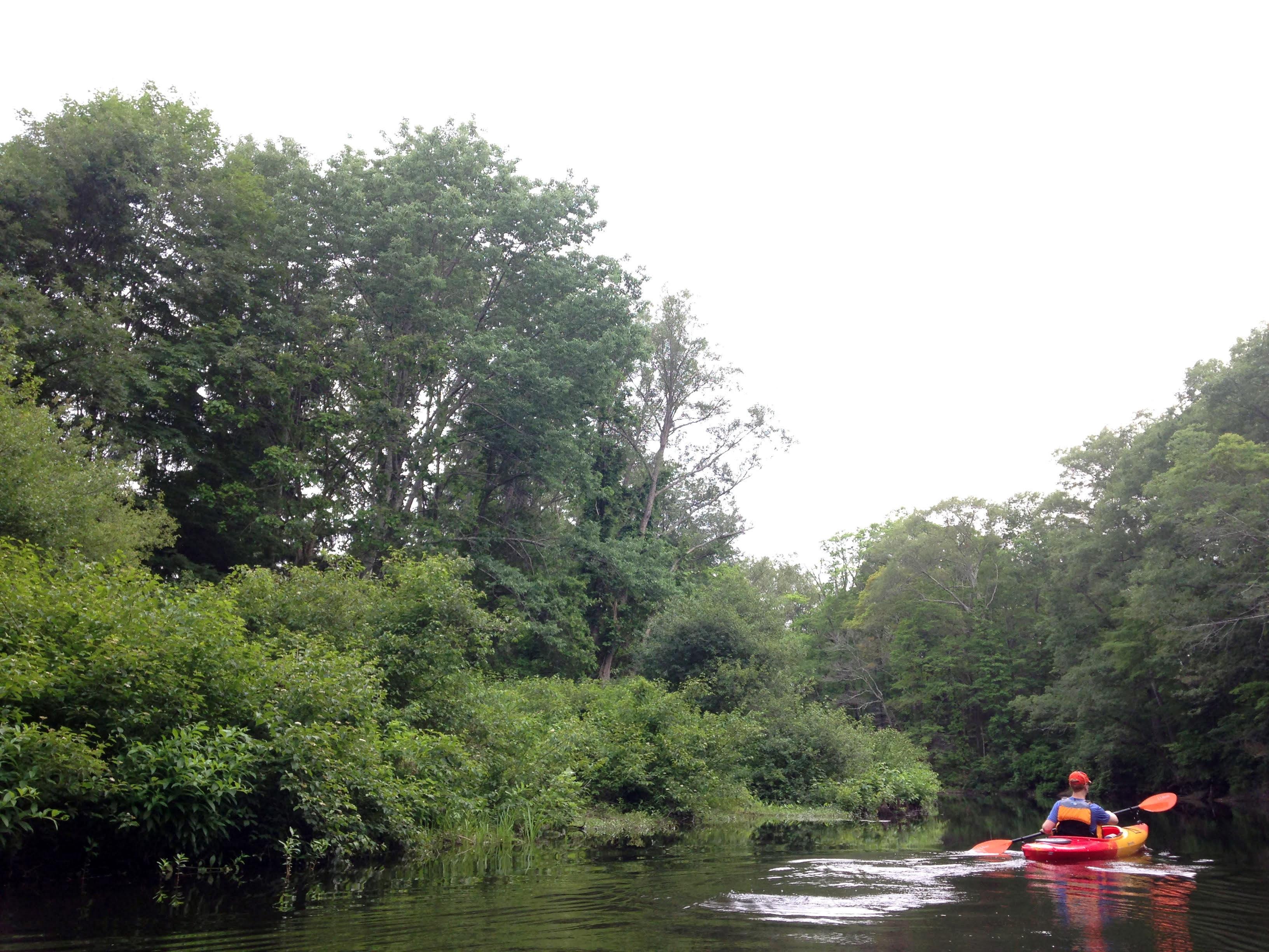 kayaking elm abnk charles river